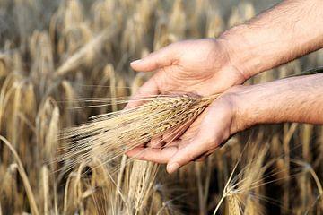 Grain et mains sur Peter Felberbauer