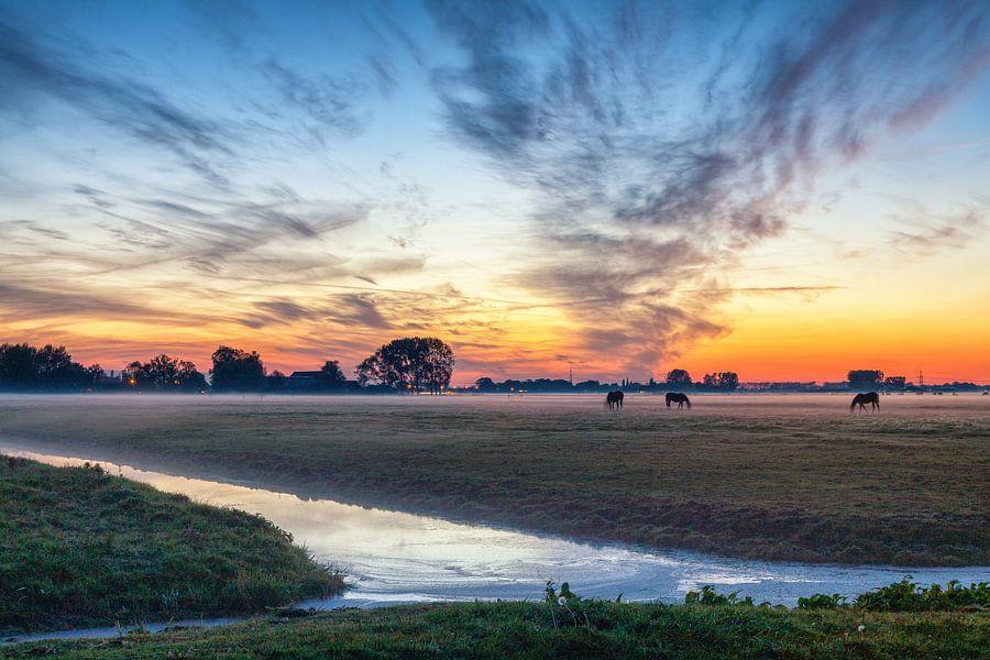Grazende paarden bij zonsondergang aan de stadsrand van Groningen