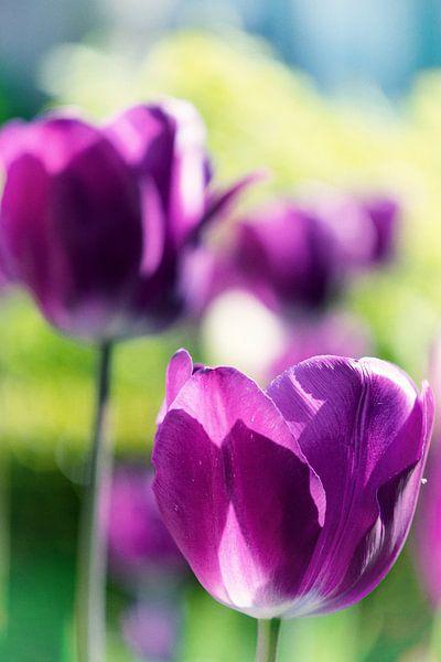 Paarse Tulpen van Jessica Berendsen
