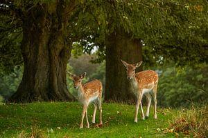 De Bambies