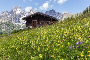 Bloemenwei in de bergen van