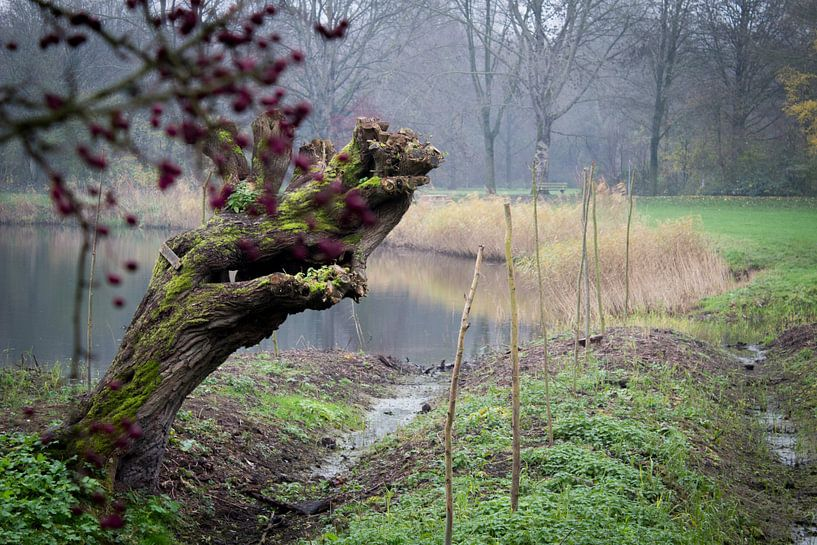 Knotwilg in de mist van Michel Vedder Photography