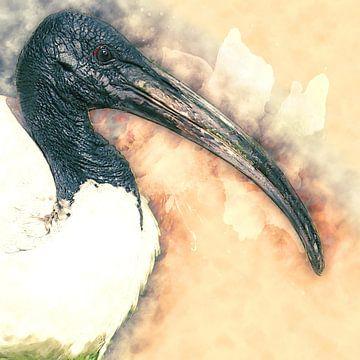 Tête noire ibis (art) sur Art by Jeronimo
