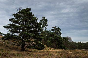 Bomen op de heide van Boudewijn Tempelmans