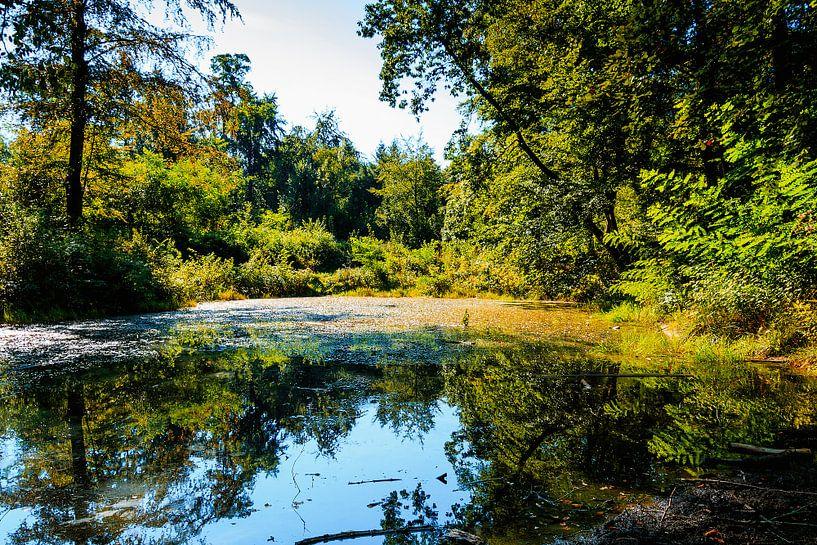 Meer in het bos van Stedom Fotografie