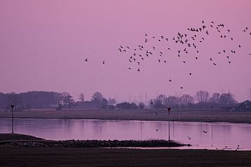 Dansende vogels boven het water van Leon Eikenaar