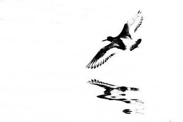 Scholekster in de vlucht boven het water (rechthoek) van