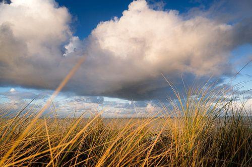 Kust landschap in de Nederlandse duinen