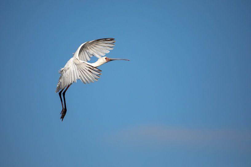 Slowing down - Vogelvlucht van Sharing Wildlife