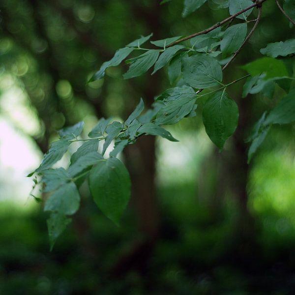 Dromerig groen van Anne Hana