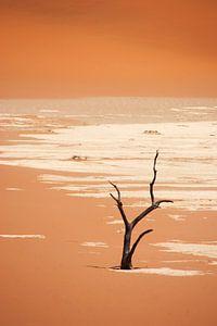 NAMIBIA ... Deadvlei van
