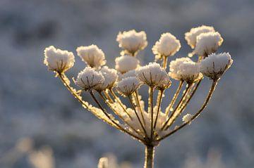Winterblume von Laura Weijzig
