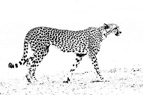 Abstracte cheetah