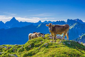 Allgäu brown cattle van Walter G. Allgöwer