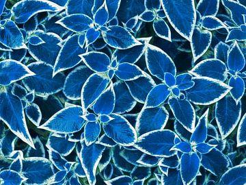 Blaue Blätter (Blätter in Blau) von Caroline Lichthart