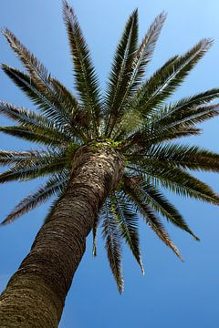 Palmboom von Evelyne Renske