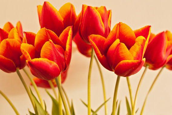 Tulpen pracht van Anneke Verweij