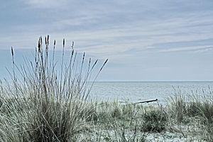 Dünen an der Ostsee