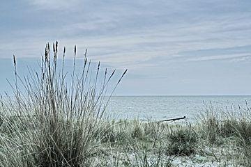 Dünen an der Ostsee von Katrin May