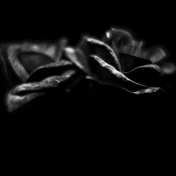 Rosen in schwarz-weiß von Rene  den Engelsman