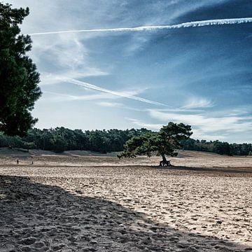 Soester Duinen met zand bomen en vliegtuigstrepen van Danny Motshagen