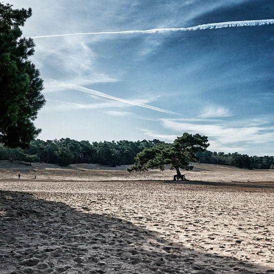 Soester Duinen met zand bomen en vliegtuigstrepen