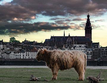 Schottischer Highlander für die Skyline von Nimwegen von bart dirksen