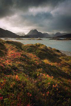 Herbststurm auf den Lofoten von Edwin Mooijaart