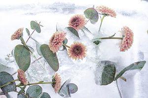 Frozen Flowers - Bevroren Bloemen In Ijs van