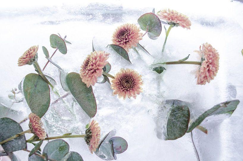 Frozen Flowers - Bevroren Bloemen In Ijs van Nicole Schyns