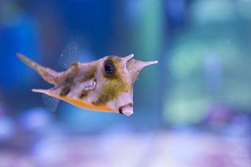 Als een vis in het water van Cathy Php