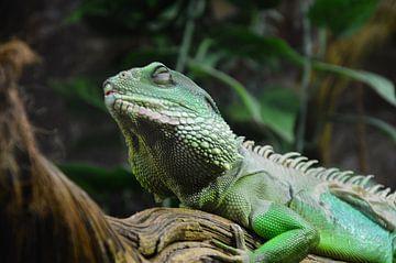 Chameleon von Susanne Seidel