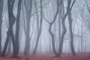 Boomstammen in de mist Speulderbos van