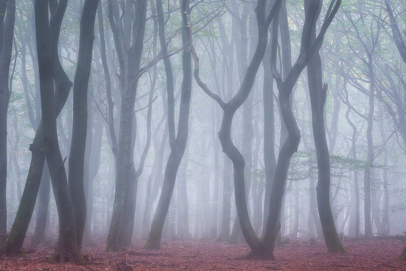 Boomstammen in de mist Speulderbos van Jurjen Veerman
