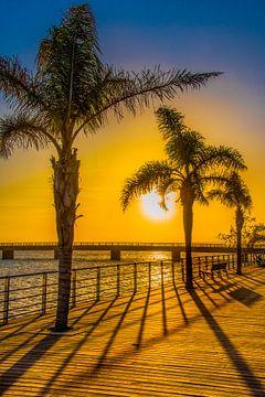 Zonsondergang met palmen en de schaduwlijnen van een hek van Harrie Muis