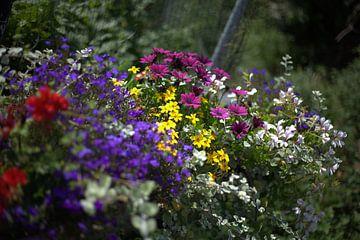 Dünen, Blumen von harm Henstra