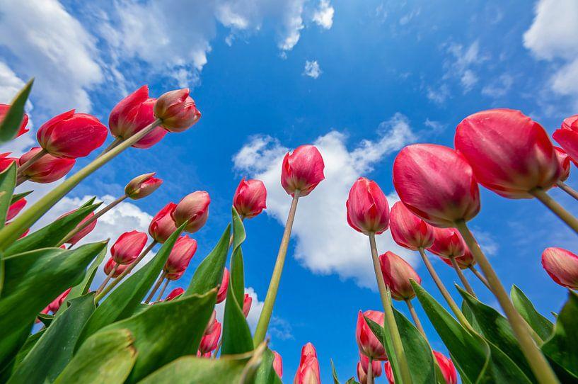 Tulpen in den Himmel. von Justin Sinner Pictures ( Fotograaf op Texel)