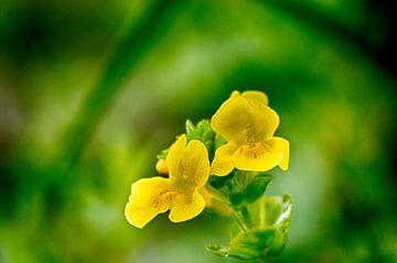 bloem van Rick Plijnaer