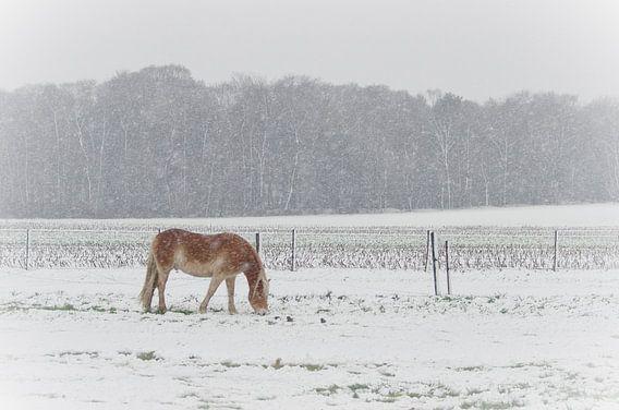 Grazen in de sneeuw van Mark Bolijn