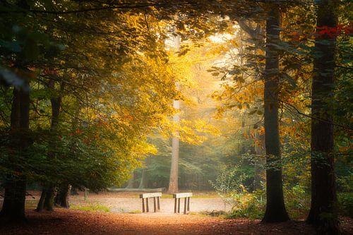 Lichten in het bos in de herfst.