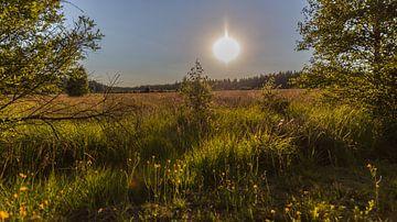 Landschaft im Hohen Venn im Gegenlicht bei Sonnenuntergang. von Gottfried Carls