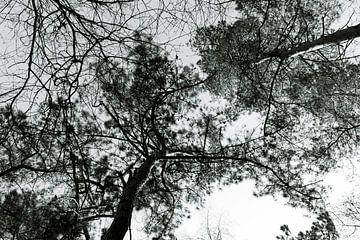 Bomen hoog in de lucht van Lieke van Grinsven van Aarle