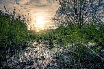 Umgebung vom Landgut Haanwijk von Marcel Bakker