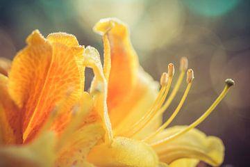 Blume von Niels Barto