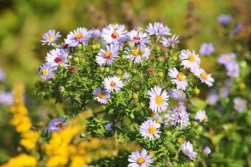 bloemen buiten van Bas Berk