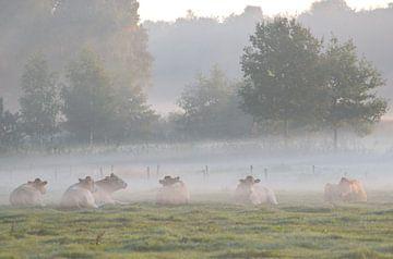 koeien in de mist van Petra De Jonge