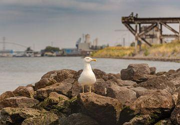 Kaper op de kust van Donny Kardienaal