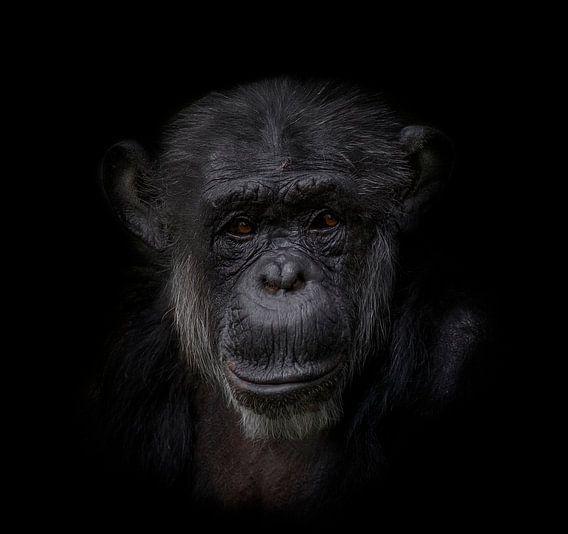 Chimpansee | Dark Animal Portrait van Ron Meijer