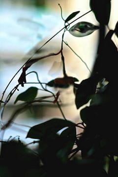 Zomer in groen en zwart van Marianna Pobedimova