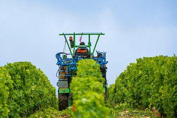 Auf dem Traktor im Weinberg von Reismaatjes XXL